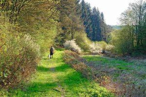 wandelen Eifel